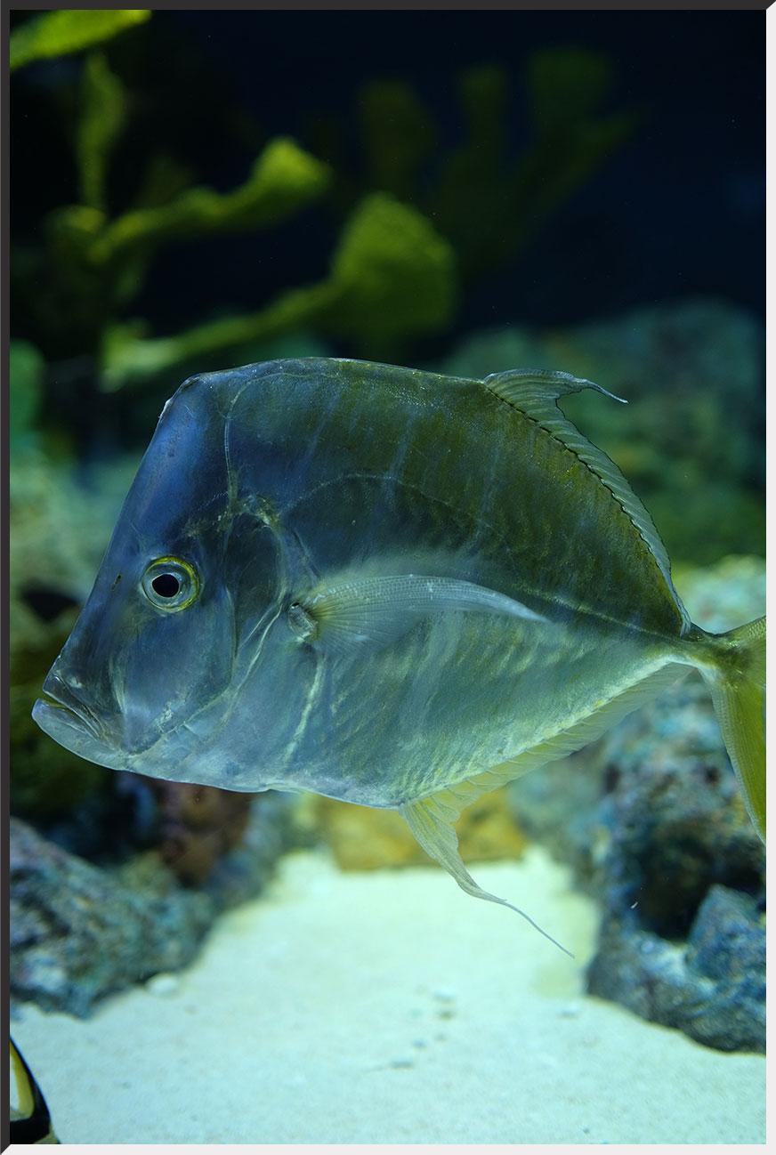 aquarium_140404_08.jpg